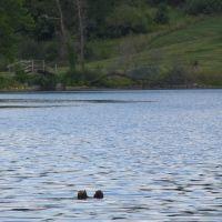 Tody Lake, Гудрич