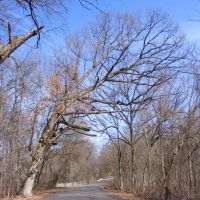 """Grand Old Oak"" - Spring view of Spring Valley Park, Kalamazoo, MI, Иствуд"