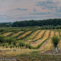 Dawn: Trees Line the Landscape, Кутлервилл