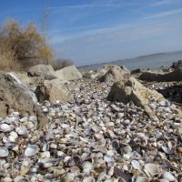 Shells from Lake Erie, Луна-Пир