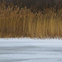 Two tones (A frozen pond, Allens Cove Unit of Erie State Game Area), Луна-Пир