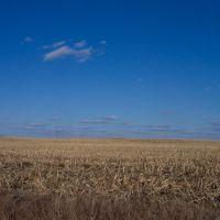 Field in Thetford Twp, Маунт-Моррис