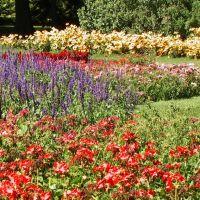 Dow Gardens, Midland MI, Мидланд