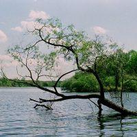 Water Tree, Монтроз