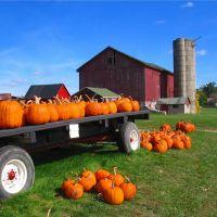 Fall pumpkin crop, Монтроз