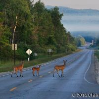 Are These Deer Breaking the Fourth Wall?, Мунисинг