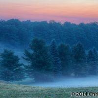 Foggy Trees at Dawn, Мунисинг