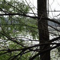 Jackson Hole Lake (Through The Trees), Огаста