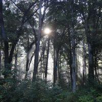 Sunrise Through The Trees, Огаста