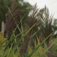 Swamp Grass, Саутфилд
