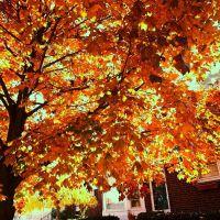 Autumn Colors Harper Woods Michigan USA, Харпер-Вудс