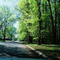 Forest in Balduck Park near Marquette Elementary School Detroit Michigan USA, Харпер-Вудс