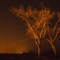 Swords Park Trees, Биллингс