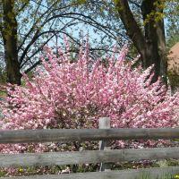 Spring Bloom, Эвергрин