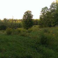 Perfect Hidden Meadow, Бакстон