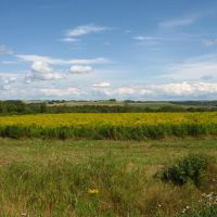 Farm Fields Aroostook County Maine, Бревер