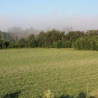 Potato field in bloom, Горхам
