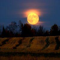 Harvest Moon, Левистон