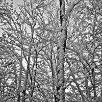 A Snowy Day, Фрипорт