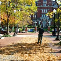 Cleaning Autumn Leaves, Johns Hopkins Hospital, Балтимор