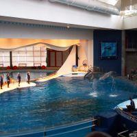Dolphin Show, Балтимор