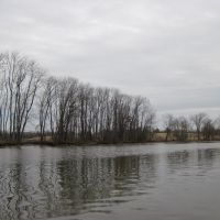 riparian trees with a matted grey background, Брентвуд
