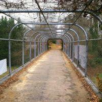 Glen Echo Trolley bridge, Palisades, Washington DC, Брукмонт