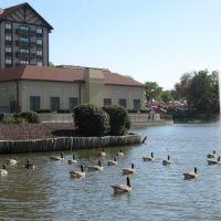Westport Plaza Lake, Вудлаун