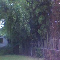Bamboo backyard on 31st Street and Windom, Mount Rainier MD, Коттедж-Сити