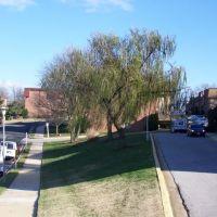 Nice Tree, Памфри