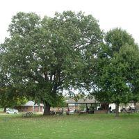 Pavilion, Oak tree, Парквилл