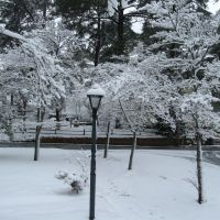 A Rare Snowstorm 2009.03.02, Фрутленд