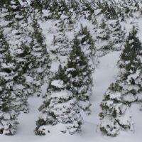 Snowy Tree Farm, Милфорд