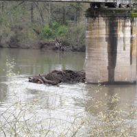 Log jam against a railroad trestle, Олбани