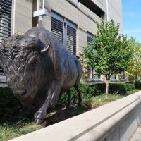 running buffalo, Spirit of Nebraskas Wilderness, Omaha, NE, Омаха
