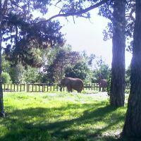 07/12/08 - Elephants in Omaha, Папиллион
