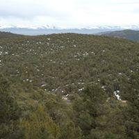 Pinyon Juniper Woodlands, Вегас-Крик