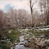 Mosquito Creek -Table Mtn Wild 5-24-1997, Калинт