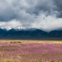Spring ~ Basin and Range, Nevada, Калинт