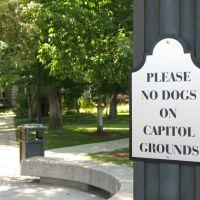 Please No Dogs, Карсон-Сити
