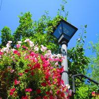 Flowered lamp post, Карсон-Сити