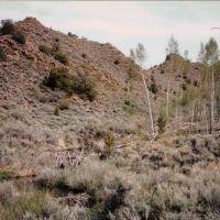 Barley Creek Beaver Dams -Table Mtn Wild 5-21-1997, Эврика