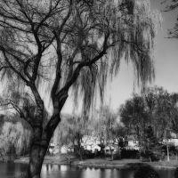 Cooper Pond, Бергенфилд