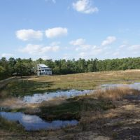 Cranberry Bog at Double Trouble State Park - NJ, Бичвуд