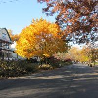 Essex Avenue, Блумфилд