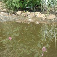 Reflection, Гилфорд-Парк
