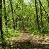 Saddlers Woods Trail, Коллингсвуд