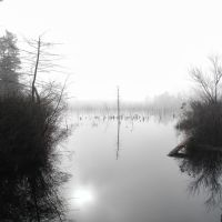 Fog on Swamp @ Horicon Lake, Lakehurst, NJ, Лейкхарст
