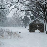 Malu walking on the snow, Моррис-Плайнс