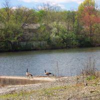 Pocahontas Lake + dam, Морристаун